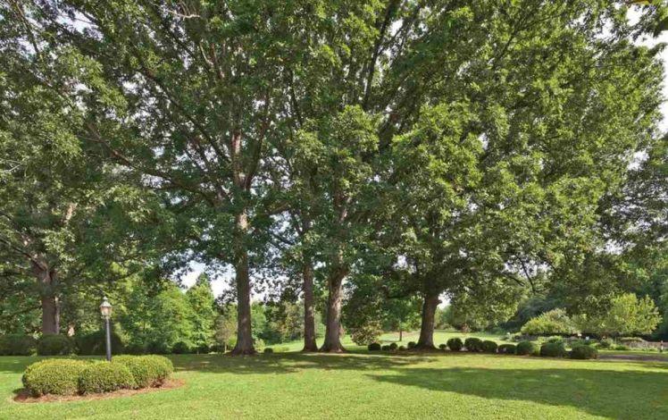 5869 u.s. 158 trees.jpg